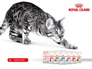 concours Royal Canin